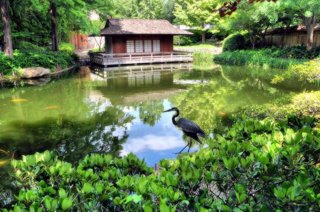 Japanese Garden Fort Worth Texas Lake Pond Tea House Ibis