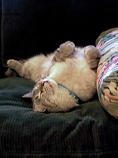The contessa takes a nap