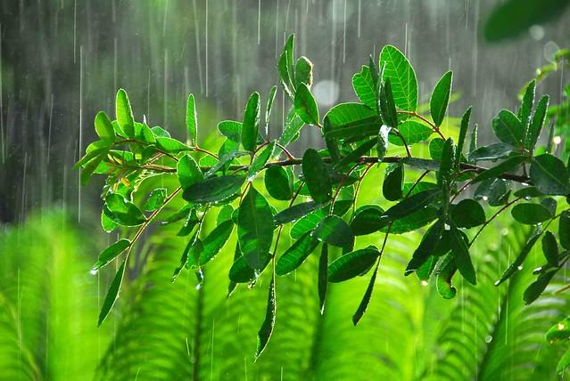 Afternoon Rain - Madagascar
