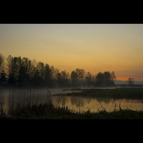 morning trees mist reflection sunrise landscape dawn spring britishcolumbia surrey april fen morningmist serpentinefen serpentinefennaturereserve decluttr kvdl