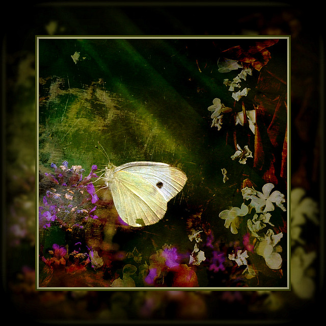butterfly kisses . . .