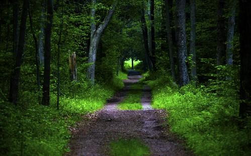 Pathway   by hmsstfu