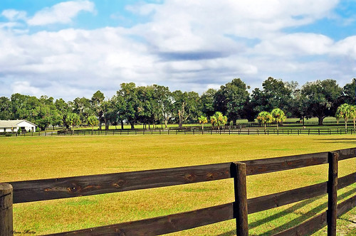 field fence florida farm pasture ocala