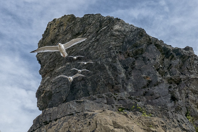 Bird of Cornwall (Part 4)