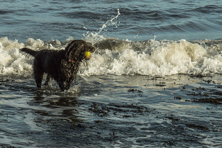 Monty in the surf