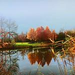 L'étang 2312