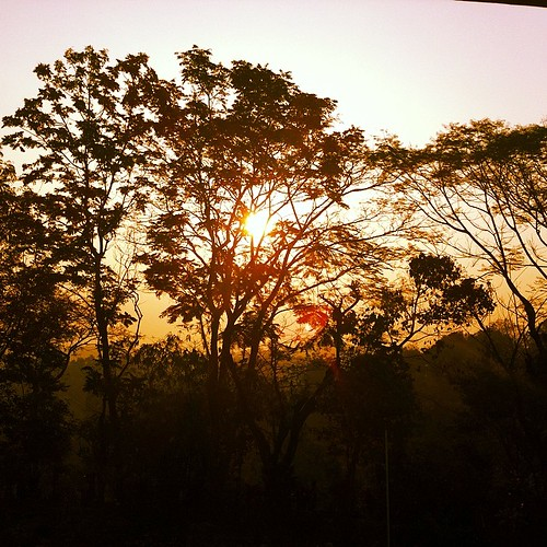 morning trees light sky sun nature silhouette sunrise square big haze warm squareformat kelvin sylhet bangladesh iphone shadman iphone4 iphoneography projectweather instagramapp shadmanali