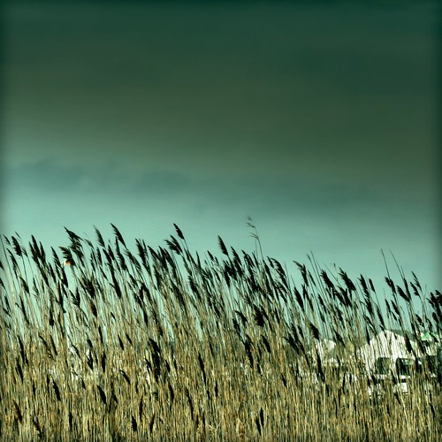 blue plants marina reeds boats searchthebest squared impendingstorm saltwatermarsh