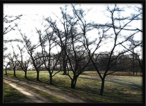 trees light maryland lane churchyard soco stjames lothian southcounty annearundelcounty