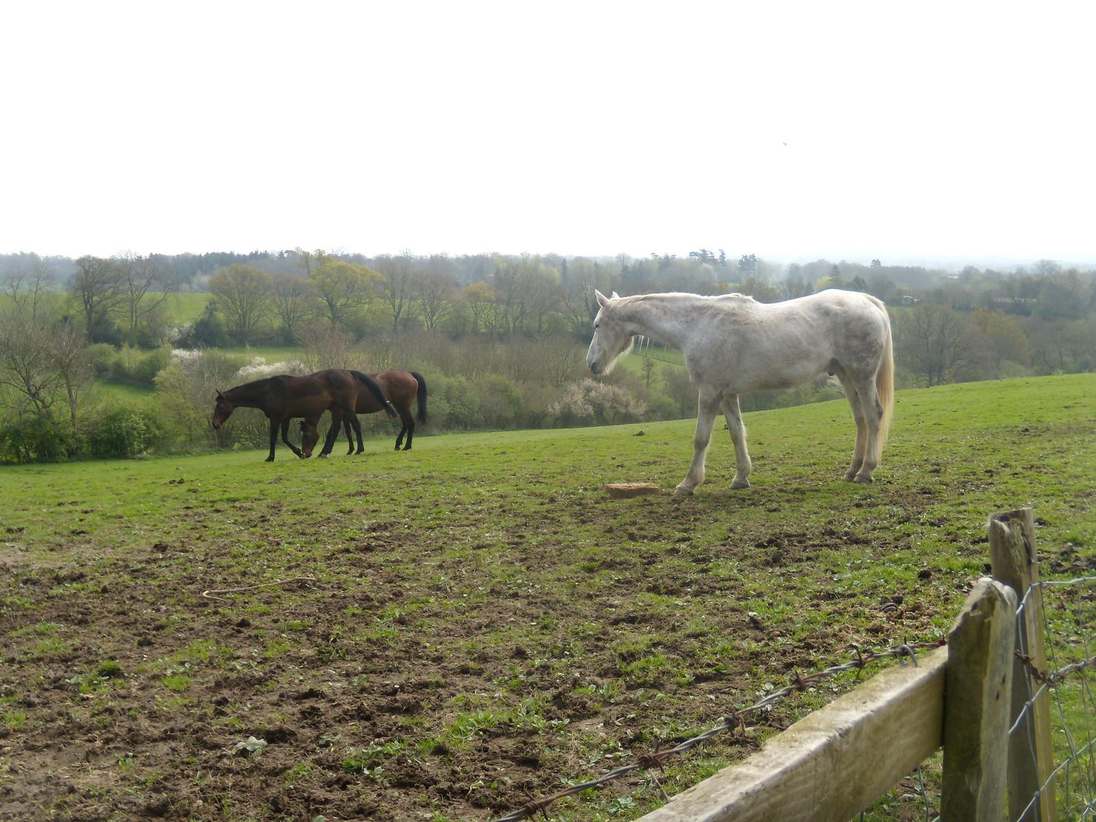 Horses Billingshurst to Amberley