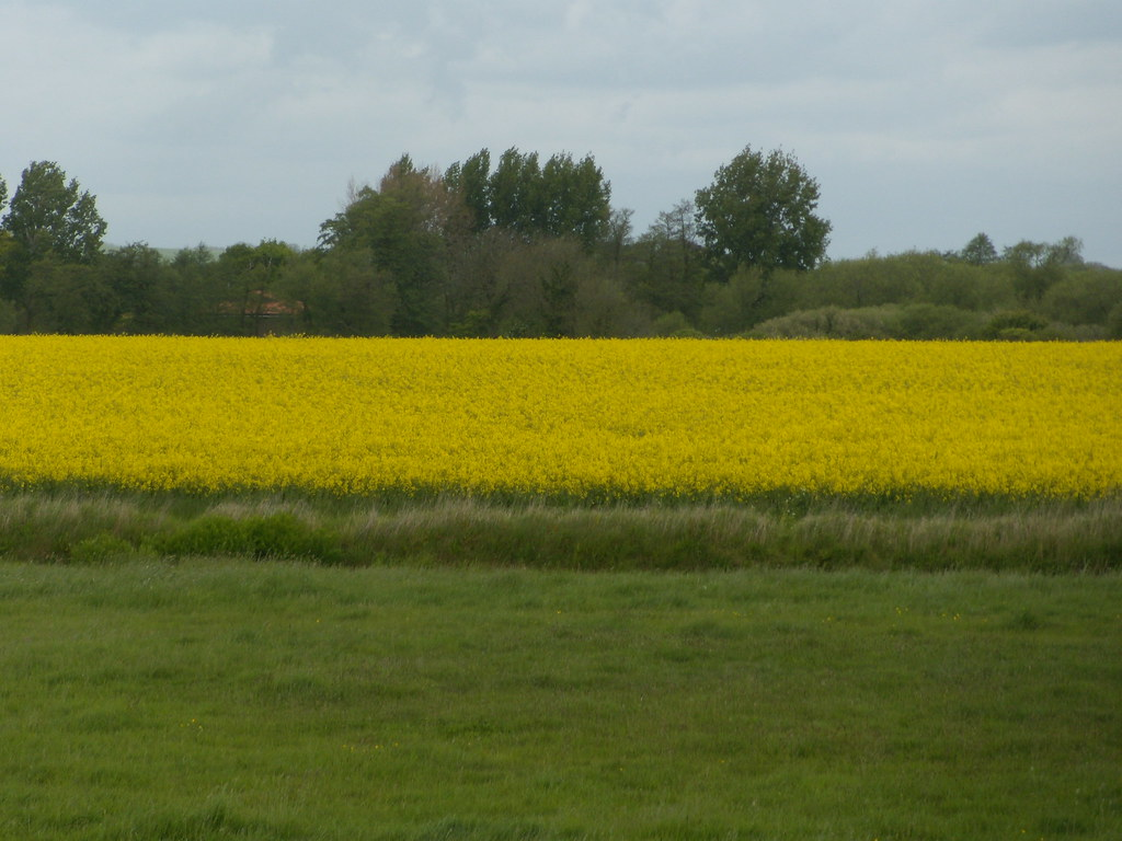 Rape Southbourne to Chichester