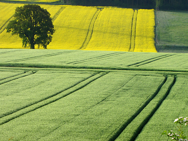 Shades of green and yellow