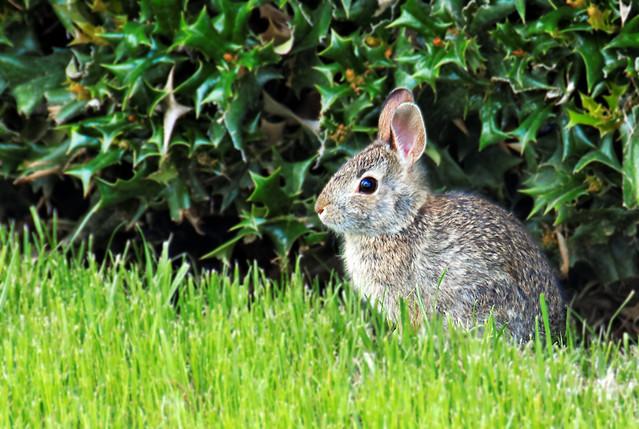 Bunny! - #0481