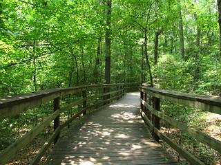 Boardwalk Trail, Congaree National Park (2) | by Ken Lund