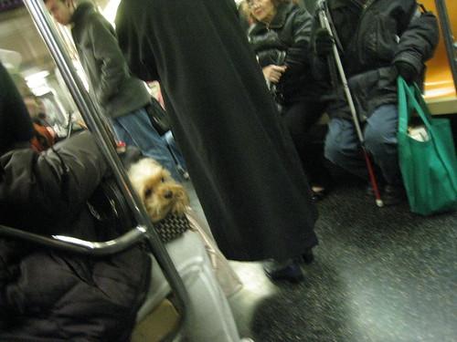 365.80: Dog on Subway