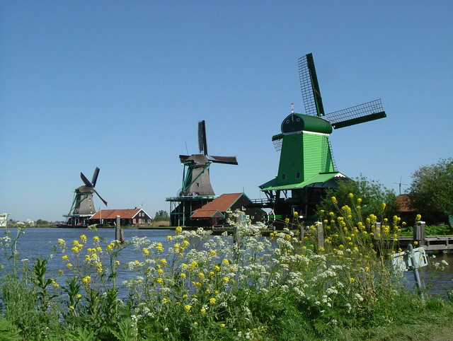 Windmills and Wildflowers, Zaanse Schans, Holland @ 2nd May 2007