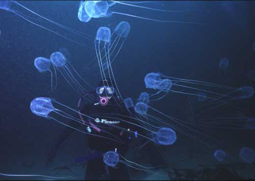 diver and box jellyfish