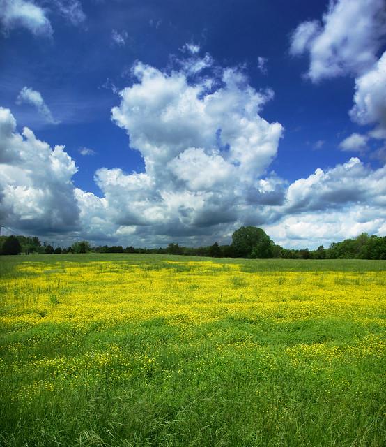 Wildflower Field, Dodson Chapel Rd, Overton Co, TN