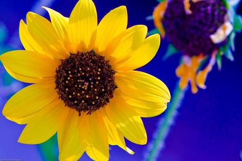 flowers nature may 2009 mckinneyroughsnaturepark lcra austinbr