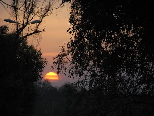 sunset tree canon asif sx100 asifmahmood asifphotography asifmahmoodphotography