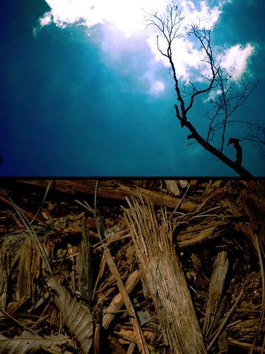 blue tree silhouette clouds shot frog bark dayor