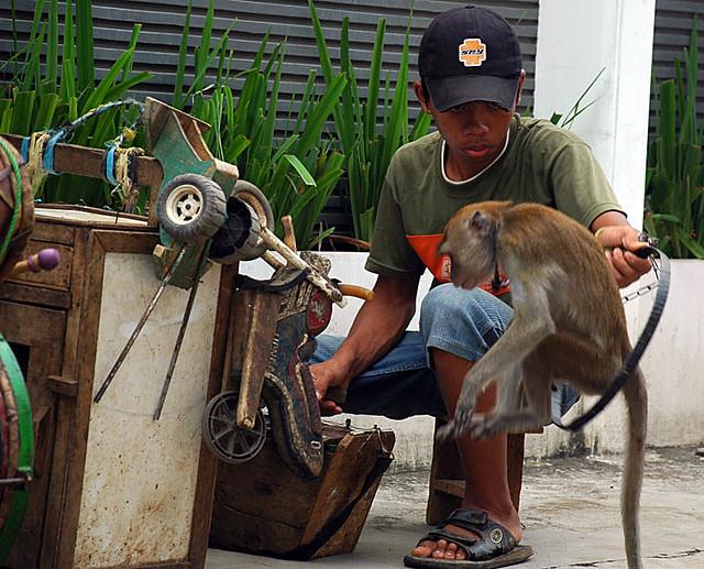 Topeng Monyet (3)