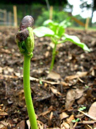 Beans are Up   by OakleyOriginals
