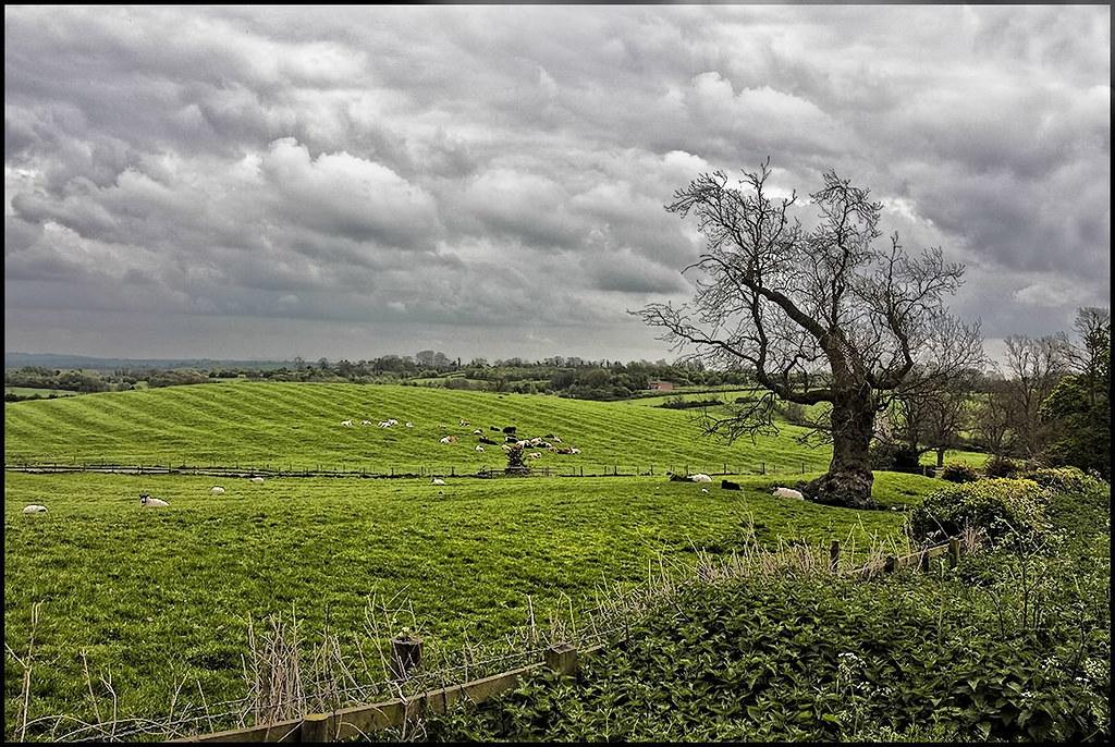 Furrow and Ridge. by Pat Dalton...