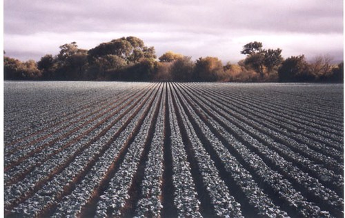 River Road crops