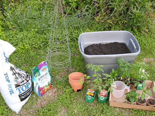 plant garden tomato georgia pot soil 2009 lavonia