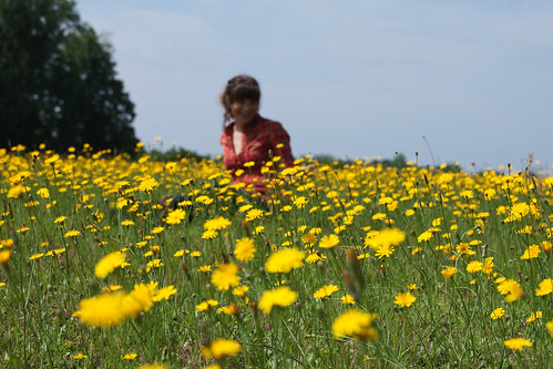 flowers brown girl field yellow canon dark hair eyes weeds bright native gorgeous sunny lips american cheeks indie hippie bangs plaid dandelions 70200mm expansive isusm brandonwarren eos5dmarkii leahheidelmeier