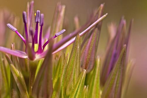 flower flowers macro closeup denverbotanicgardens colorado landscapes