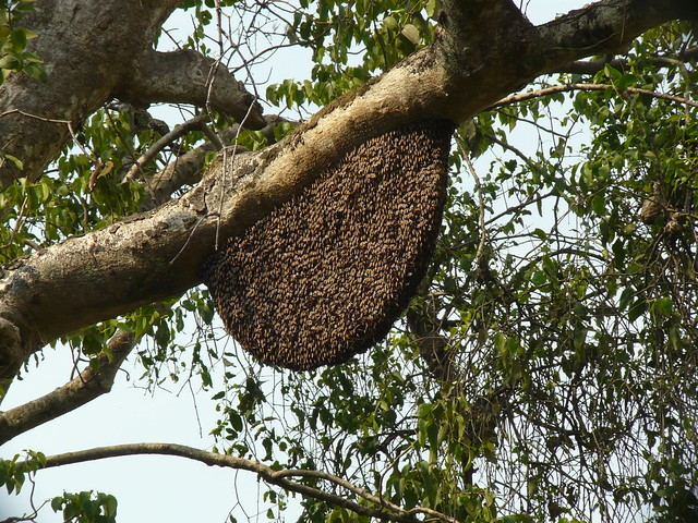 ... beehive