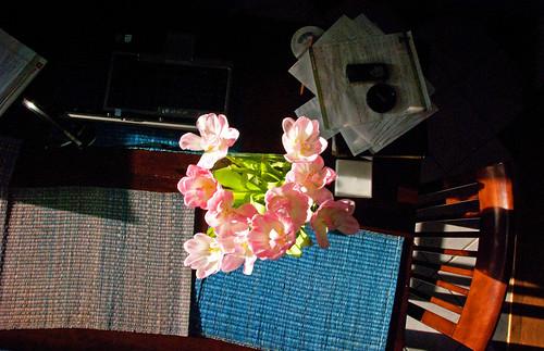 morning pink flowers blue light sun green nature sunshine minnesota closeup sunrise dark table landscape dawn early office petals spring nikon scenery glow tulips perspective minneapolis fresh planet april rays twincities 2009 18200mm nikond40x rosemaryverey yenumula worldofarun thestillnessoftheearlymorningsceneenablesmetotakeinandenjoymanythingswhichpassmebyduringthebustleofthedayfirsttherearethescentswhichseemevenmoregenerouswiththeirofferingsthantheyareintheevening arunyenumula
