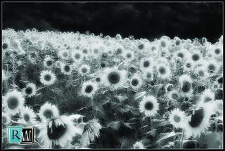 Field of Dreams | by Ryan Wenner