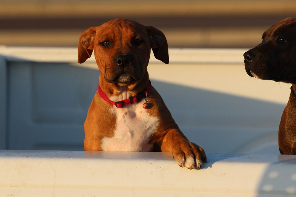 Pickup Puppy