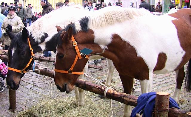 Leonberger-Pferdemarkt - hübscher Schecke