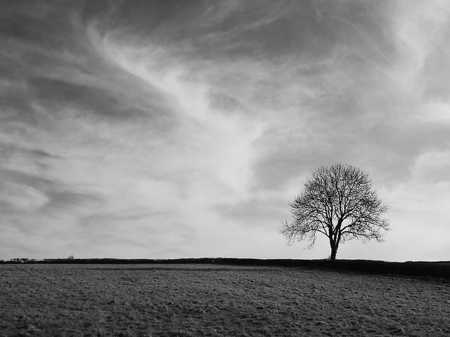 Winter Oak, Cotswolds
