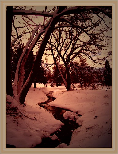 trees winter snow ontario canada water creek stream stayner