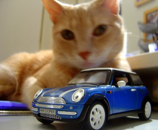the giant Milo attempts to pull himself from his catnap to wreak havoc on the MINI Cooper | by Malingering