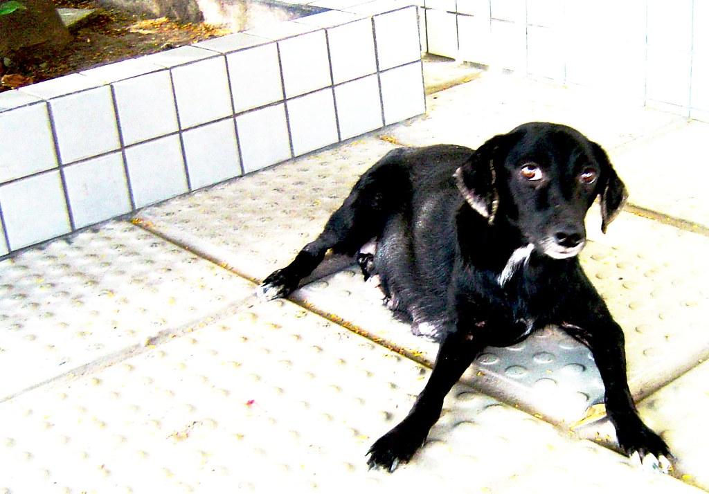 Cadela de rua (street dog)