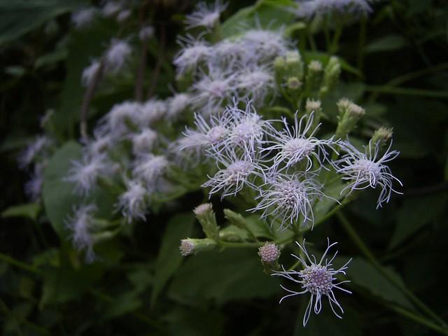 陌生的蔓性植物