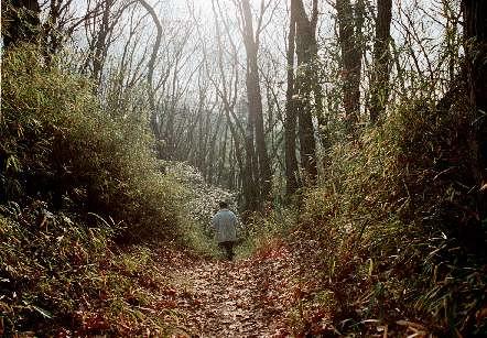 Onda Forest