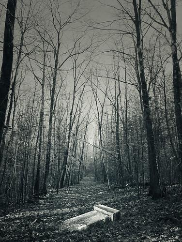 trees blackandwhite topf25 monochrome grave silhouette composite 1025fav forest path branches topv1111 hill tombstone 100v10f fallen gravestone hooflandermountain