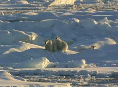 Noordoost Groenland, september 2005 | by Martha de Jong-Lantink