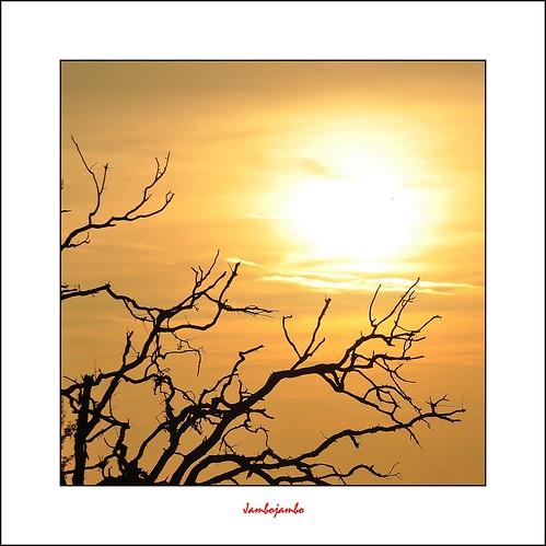 sunset italy oak italia tramonto tuscany toscana grosseto maremma roselle quercia nikond5000 jambojambo