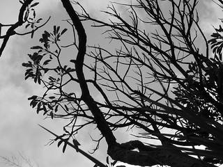 trevas | by Eduardo Loureiro