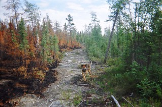 Forest Fire Stopper