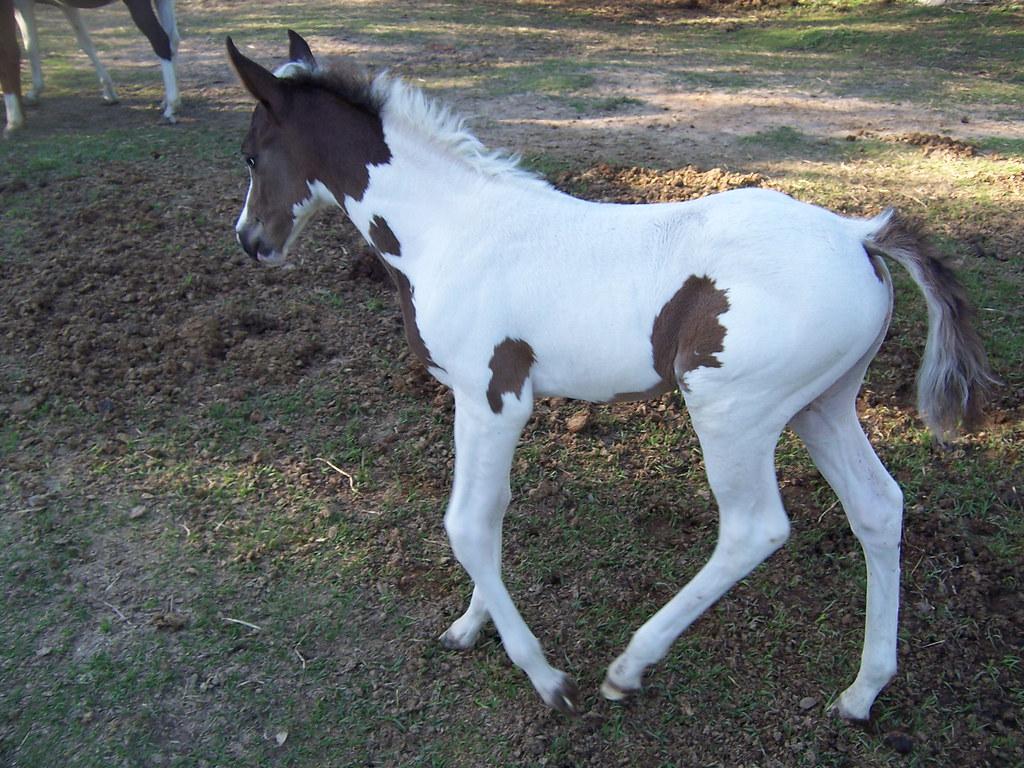 new equine