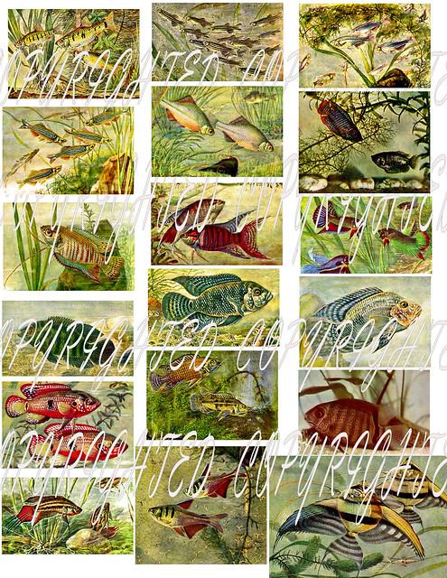 Fish digital collage sheet